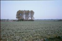 Lowland Village Chalklands + North of Hexton, Hertfordshire (1999) ( HCC Landscape)