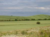 Chalk Hills and Scarps + The Upper Chalk scarp at Bird Hill, Clothall, Herts.  ( Geo-East)