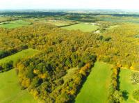 Bencroft Wood, Hertfordshire ( HCC Rural Estates)