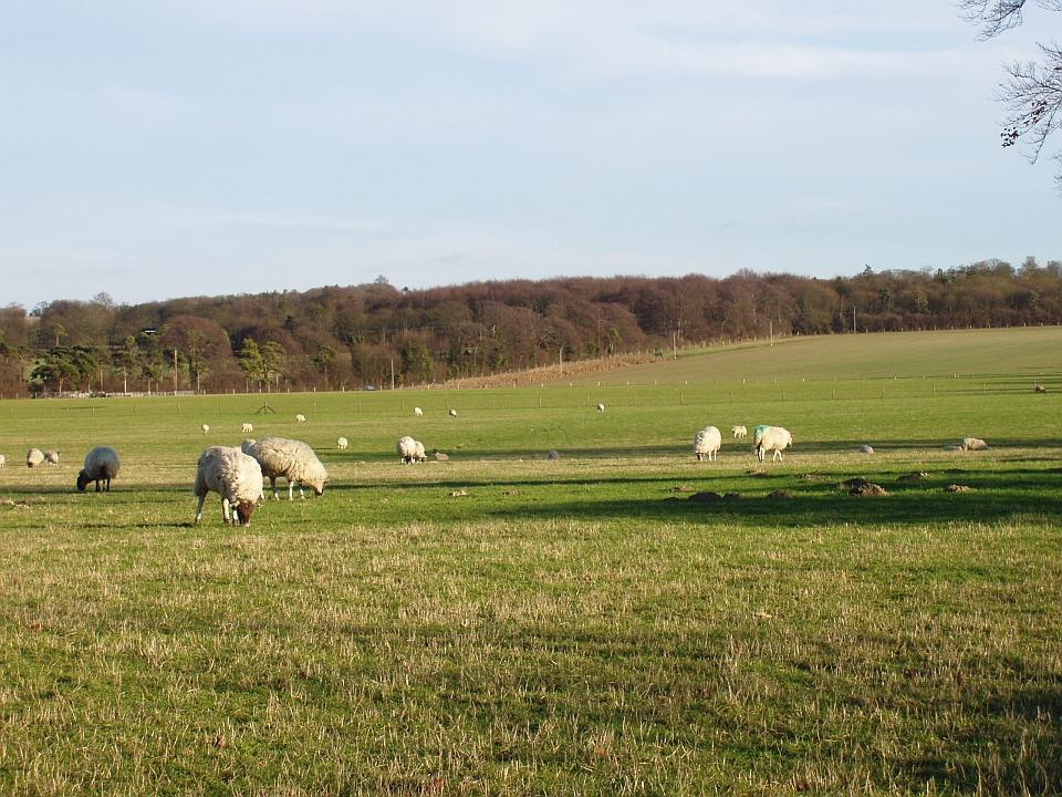 Chalk Hills and Scarps + Pasture near Chrishall Grange, Cambridgeshire. ( Geo-East)
