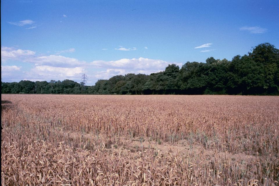 Coppice Wood from White Horse Lane, nr St Albans, Hertfordshire (2000) (© HCC Landscape)