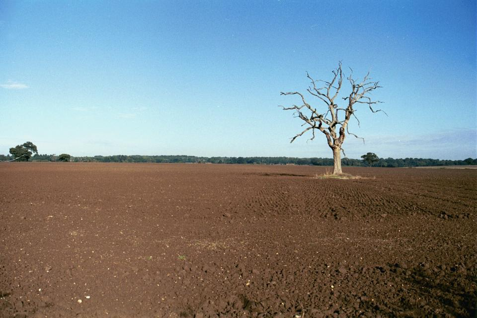 Whitegate Lodge field nr Hatfield, Herts, (2000) (© HCC Landscape)