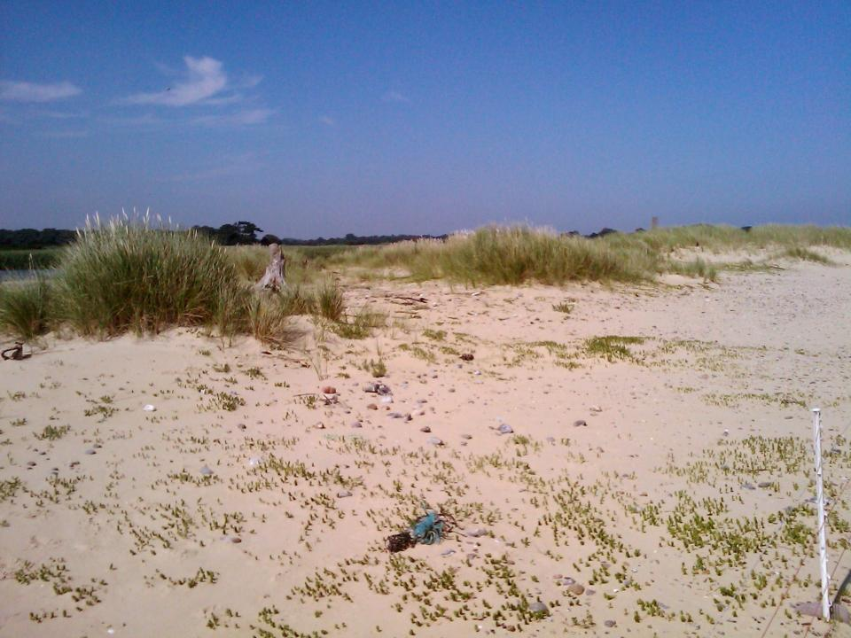 Coastal Dunes + Looking north near Covehithe Broad (© Simon Odell (2011))