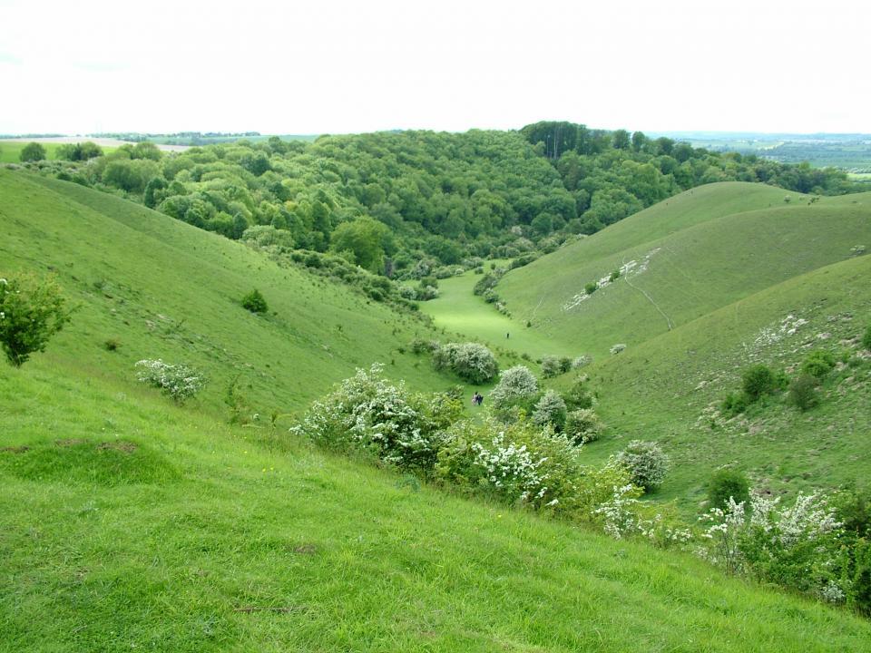 Chalk Hills and Scarps + Barton Hills SSSI, Bedfordshire (2006) (© HCC Landscape)
