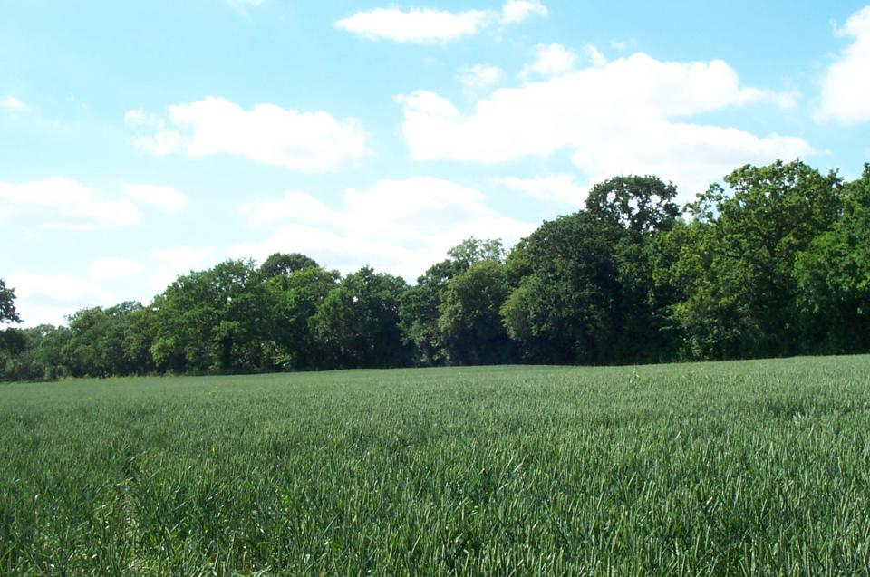 Wooded Plateau Farmlands + Looking W from Red Willow, Harlow, Essex (2004) (© HCC Landscape)