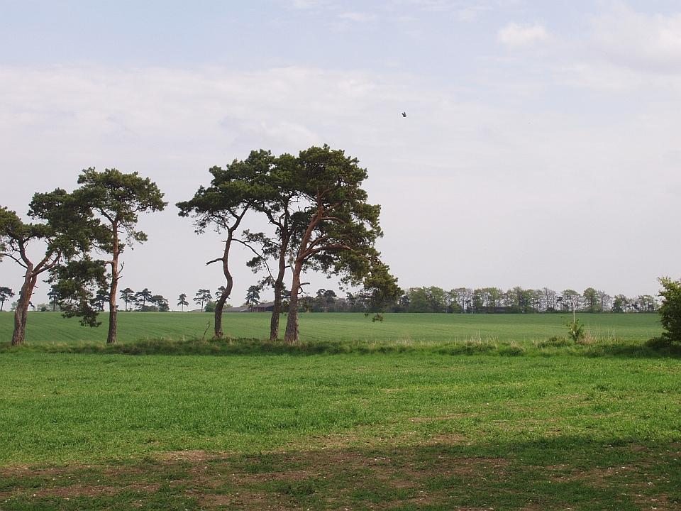 Lowland Village Chalklands + Great Wilbraham Heath, Cambridgeshire. (© Geo-East)