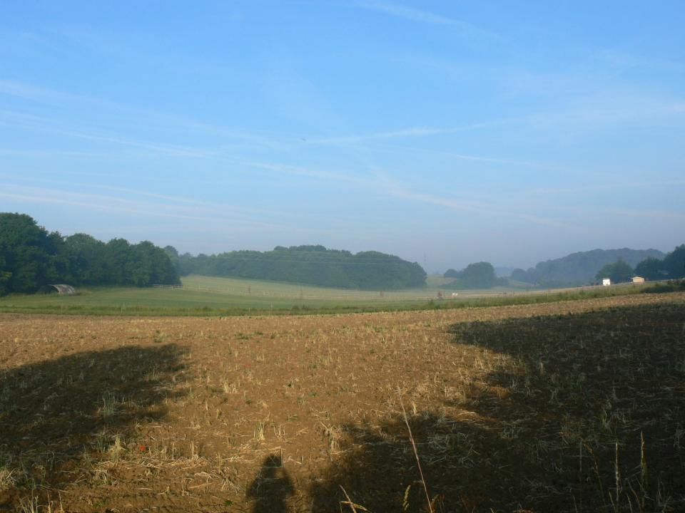 Valley Settled Farmlands + Looking west across arable fields, horse paddocks and copse woodland. Baylham, Suffolk. (© Jonathan Dix)
