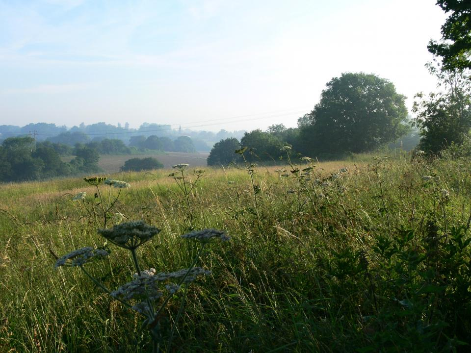 Looking east across Baylham towards the Gipping Valley. (© Jonathan Dix)