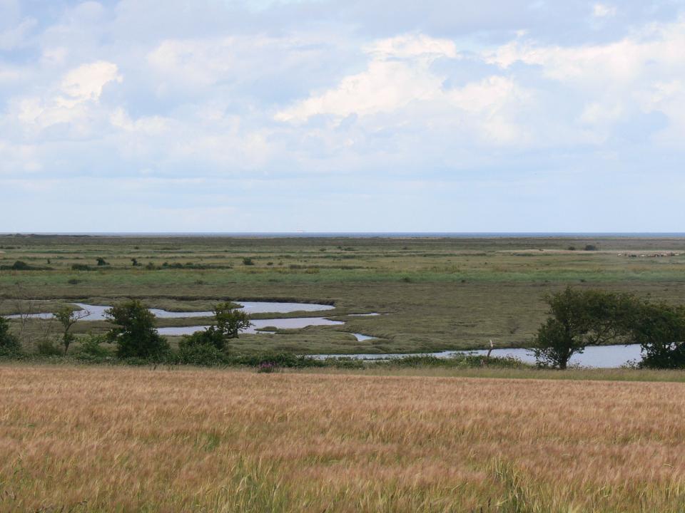 View north across salt marsh and intertidal flats just west of Burnham Overy Staithe, Norfolk  (© Jonathan Dix)