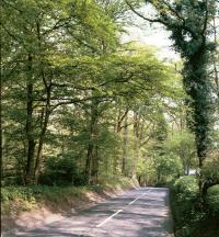 B651 near Hitch Wood, Herts  (© HCC Landscape)