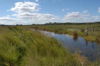 Reedbeds and dykes at Dingle Marshes Suffolk (© Suffolk County Council)