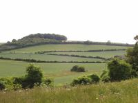 Chalk Hills and Scarps + The Middle Chalk scarp at Newfield Hill, Weston, Herts. (© Geo-East)
