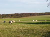 Chalk Hills and Scarps + Pasture near Chrishall Grange, Cambridgeshire. (© Geo-East)