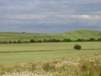 Chalk Hills and Scarps + The Upper Chalk scarp at Bird Hill, Clothall, Herts.  (© Geo-East)