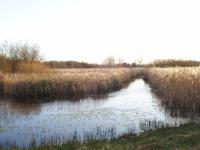 Seminatural fen habitat at Fowlmere Fen Cambridgeshire. (© Geo-East)