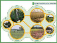 Create landscape-scale networks © East of England Biodiversity Forum